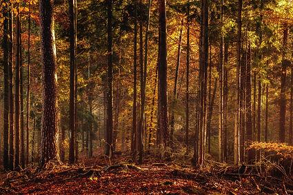 Black Forrest in Germany. Orange Evening