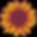 Sunflower-Illustration - Full-Color copy