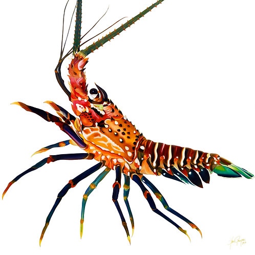 "Spiny Florida Lobster 48""x48"" giclee on canvas"