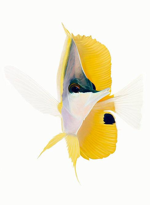 """Ocean Angel 60""""x48"""" giclee on canvas"""