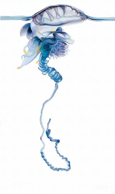 """Ocean Jelly 72""""x38"""" giclee on canvas"""