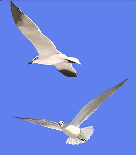 """Florida Beach Seagulls 48""""x36"""" giclee on canvas"""