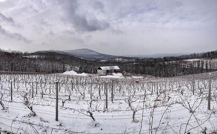 Snow Winter Vineyard Pennsylvania Vines