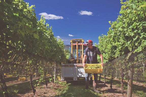 The Vineyard at Stony Run.jpg