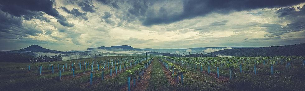 Pennsylvania View Vineyard Mountain Rang