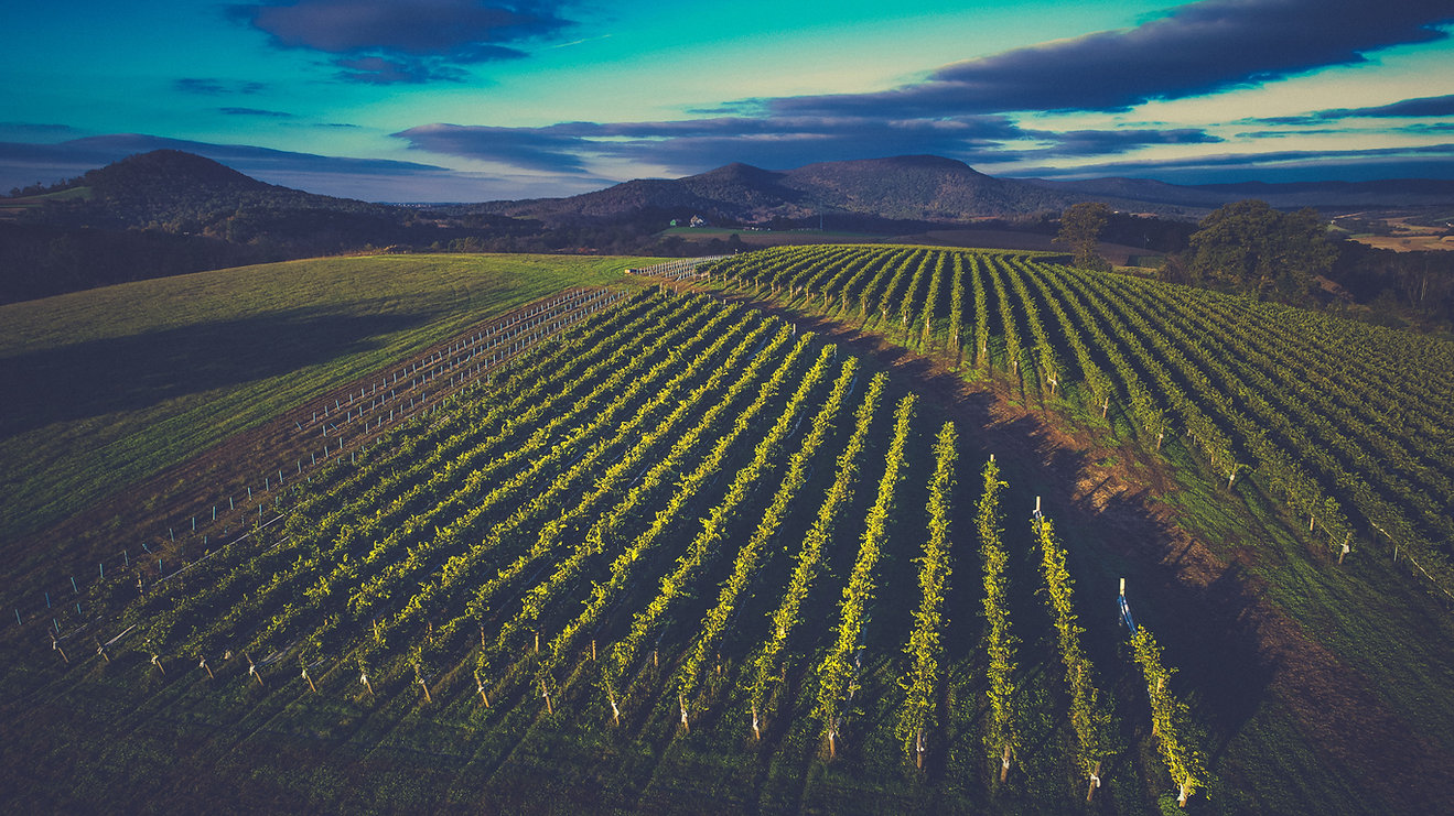 Vineyard in the Mountains at Stony Run Winery (1).jpg