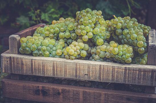 bigstock-New-Harvest-Of-White-Sweet-Cha-400374014.jpg