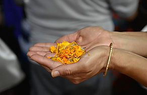 Spiritual Yoga Tour INDIA_26_edited.jpg