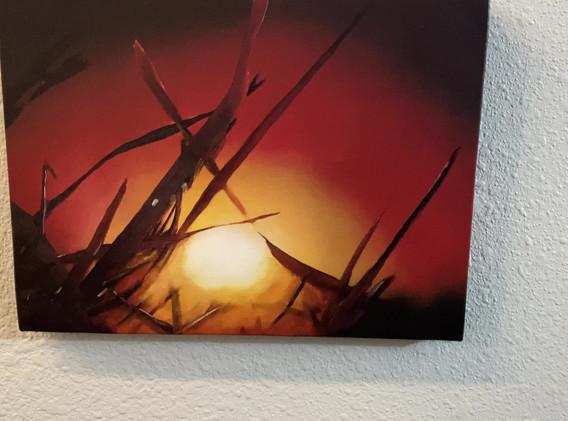 Cornfield Sun Set