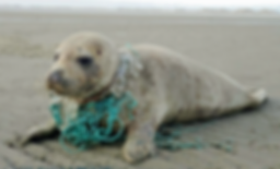 Strandopruiming -Zeehondencentrum - vrij