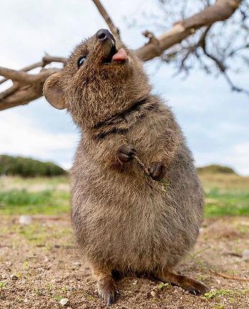 Australie Rondreis Groepsreis Rottnest I