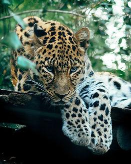 Wildlife Traveleers Zuid Afrika (28).jpg