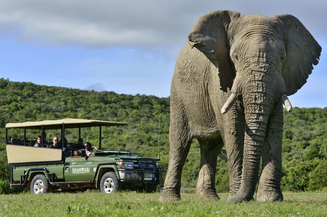 Shamwari Private Game Reserve