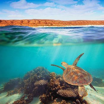 Undiscovered Western Australia.jpeg