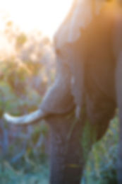 Wildlife Traveleers Zuid Afrika (16).jpg