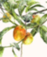 mango-tree-painting-copy.jpg