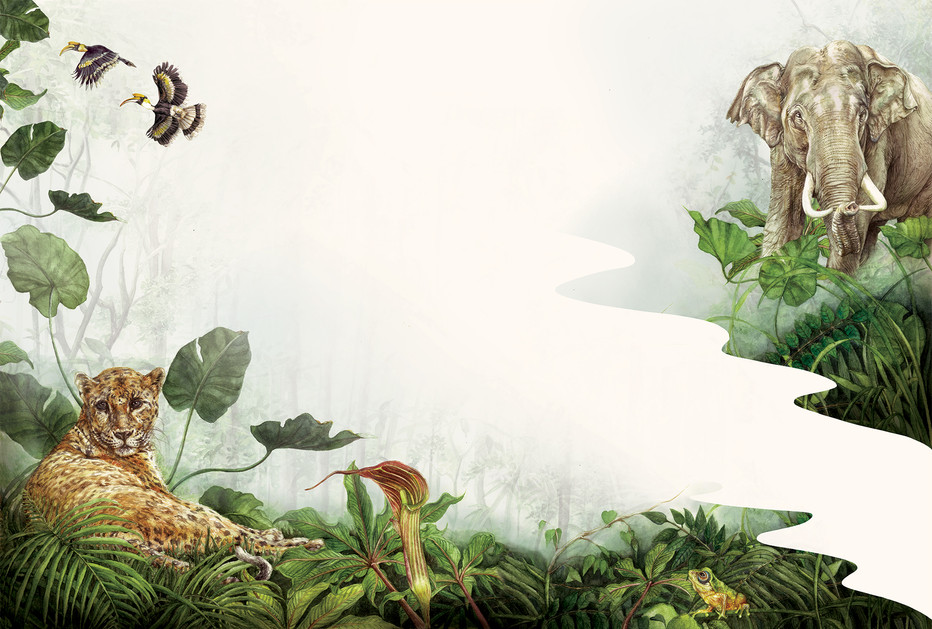 Jungle-spread--copy.jpg