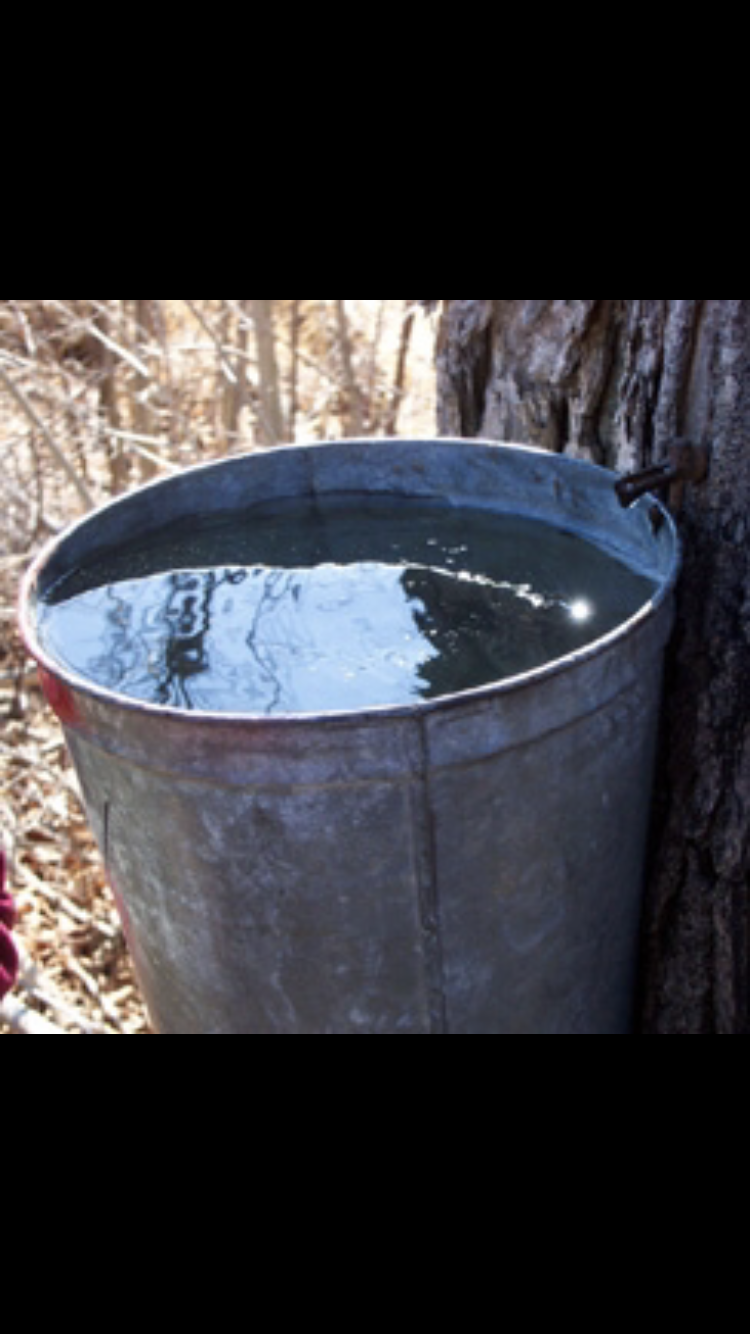 We love full sap buckets