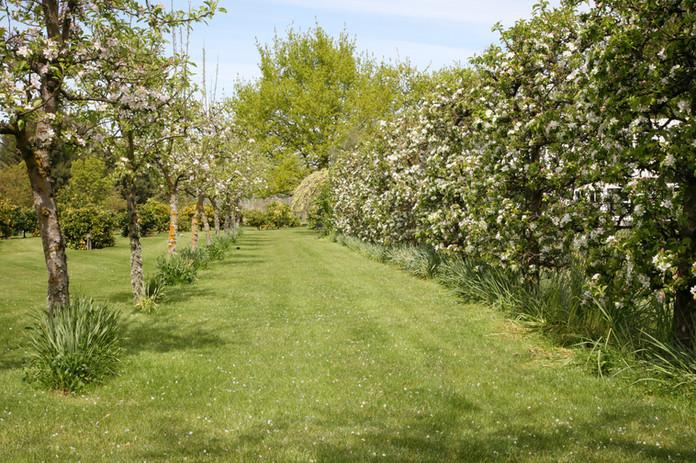 Landing at Homebush, Masterton - Gardens 2