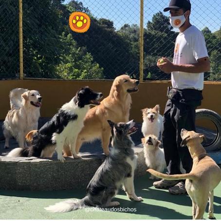 Sobre o vínculo entre dogs e humanos