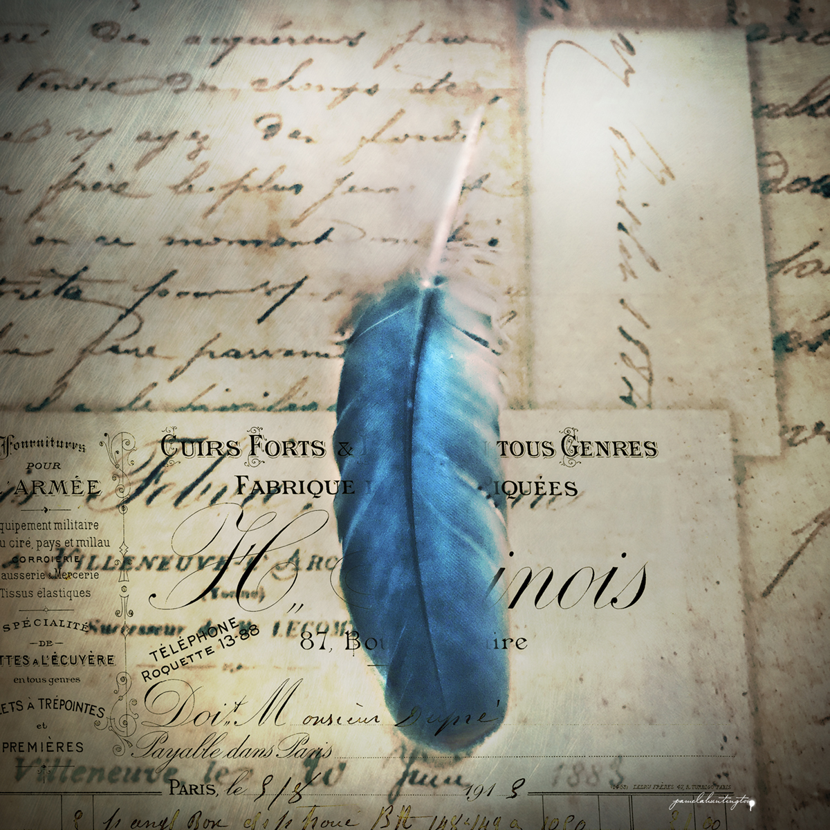 Feather on Paper for book copy copy