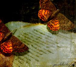 Fluttering 3