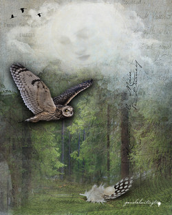 _Owls Fly Silently_