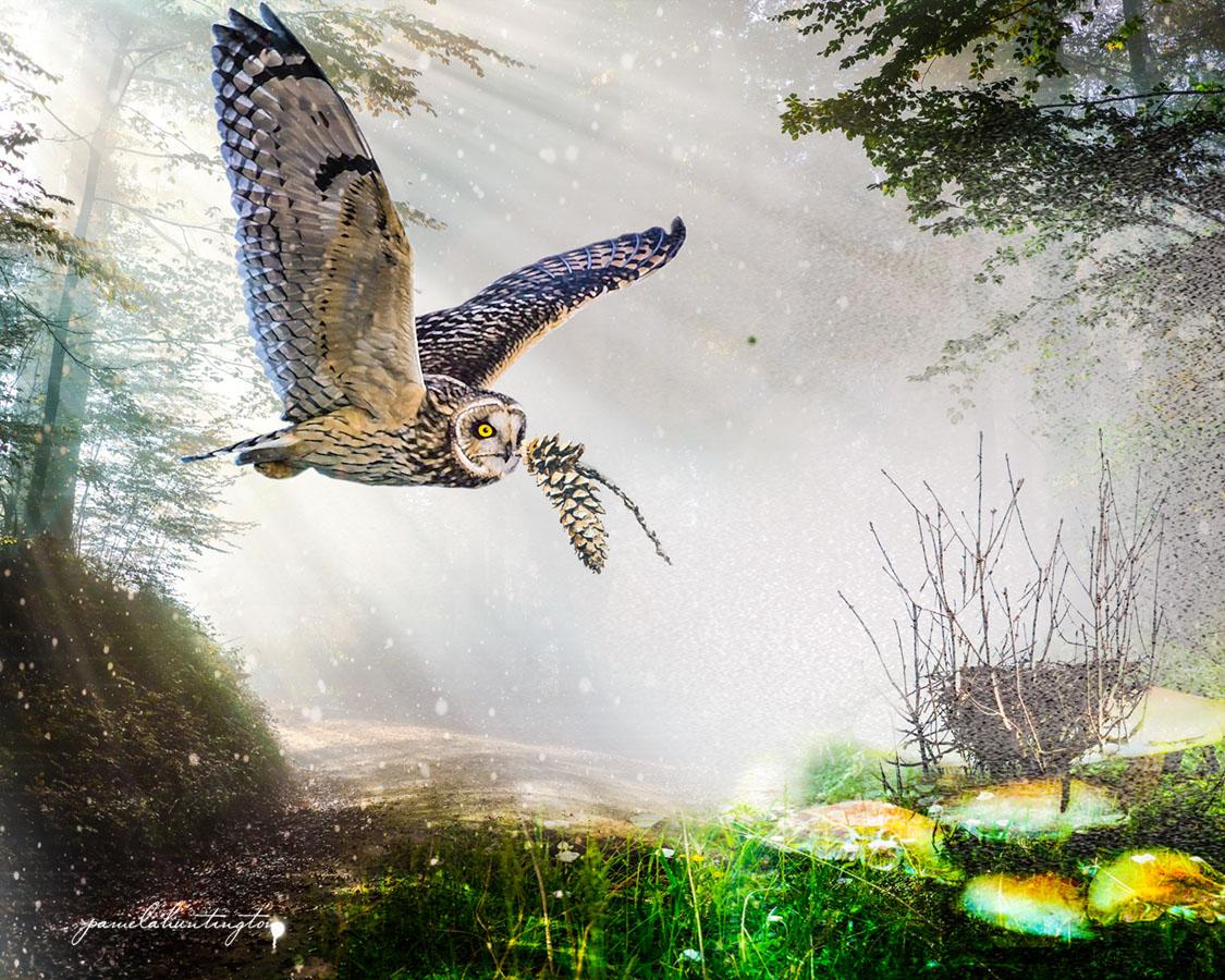 Dear Owl, where is your home?
