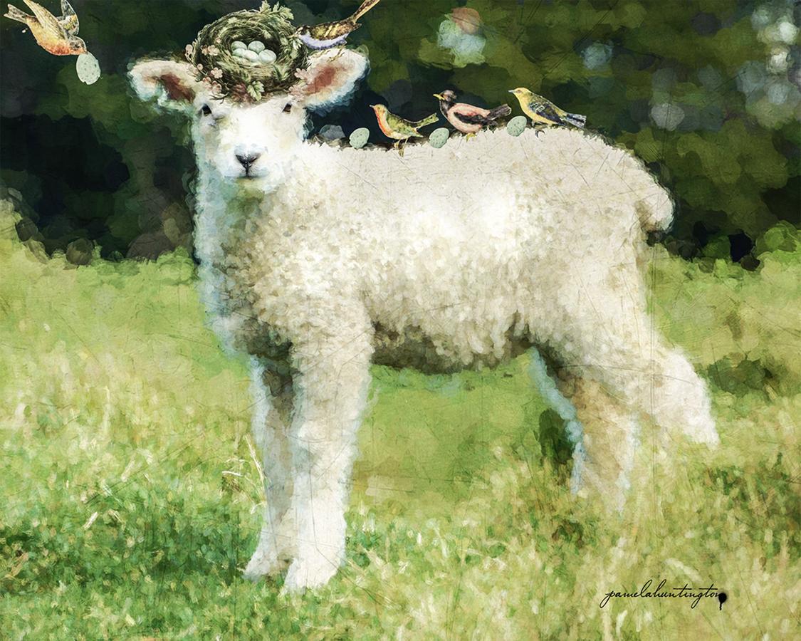 Birds and Lamb 8 x 10-lamb series copy