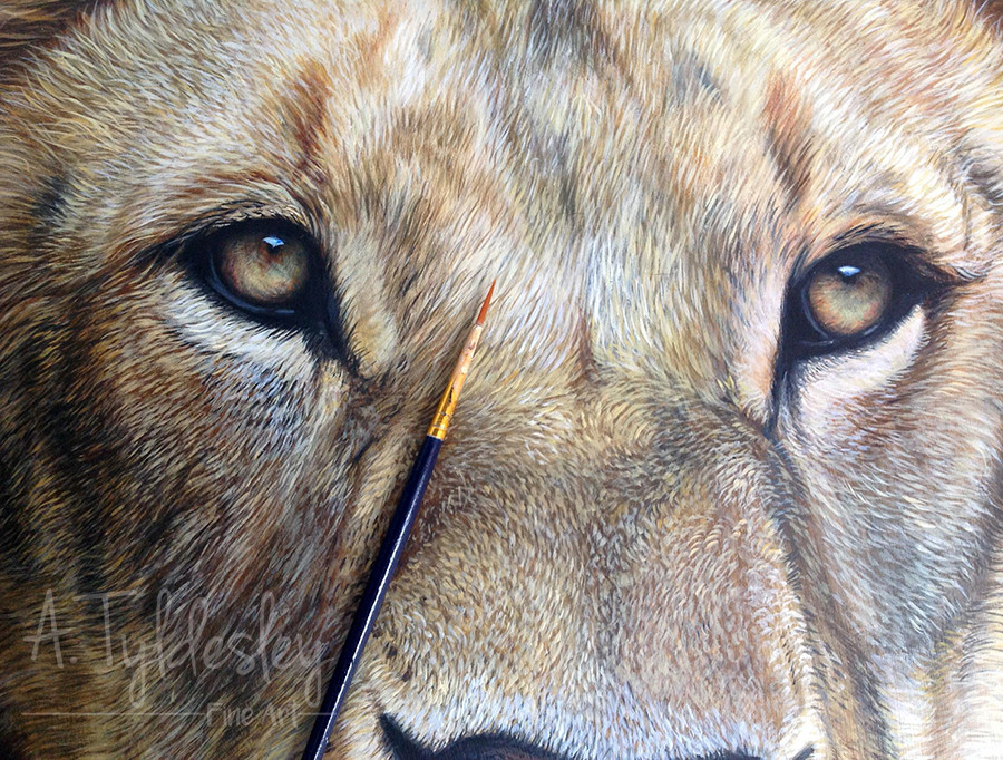 lion painting, amber tyldesley, lion art, big cat painting, realism