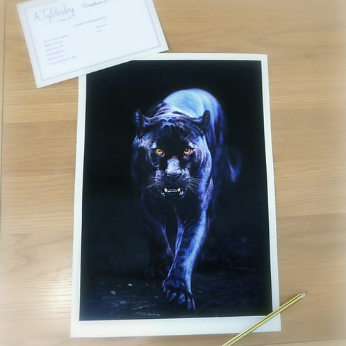 'The Dead of Night' - Limited Edition Print A3 Size
