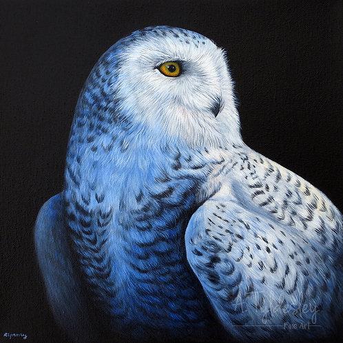 'Snowy Owl Portrait'