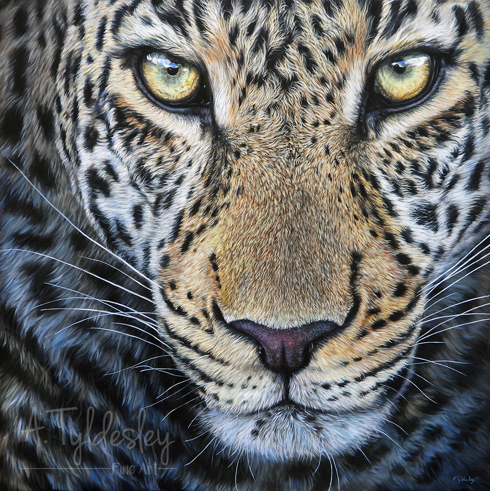 'The Wild Stare' - 60cm x 60cm Oils on Canvas (SOLD)