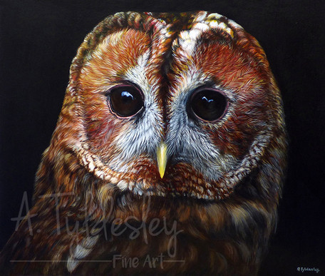 'Tawny Owl Portrait'- 30cm x 25cm Acrylic & Resin (SOLD)