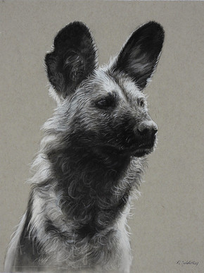 """African Painted Dog Sketch- 9"""" x 12"""" Charcoal & Pastel (Available)"""
