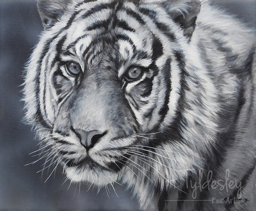 """NEW 'Monochrome Tiger- 8"""" x 10"""" Acrylic on Canvas (Available)"""