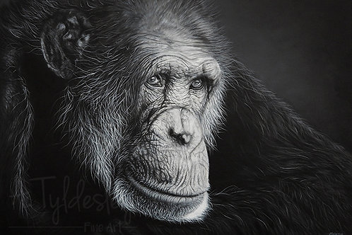'Reverie' - Limited Edition Giclee Print A3 size