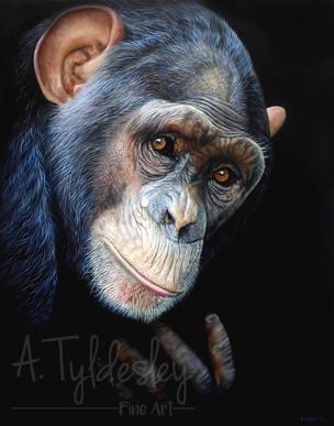 'Chimp Portrait II'- 42cm x 52cm Acrylic & Resin (SOLD)