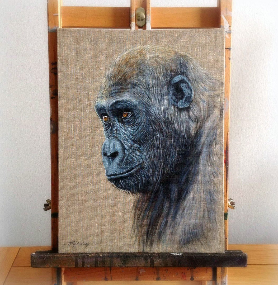 "Gorilla Study- 9"" x 12"" Acrylic on Linen Panel (Available)"