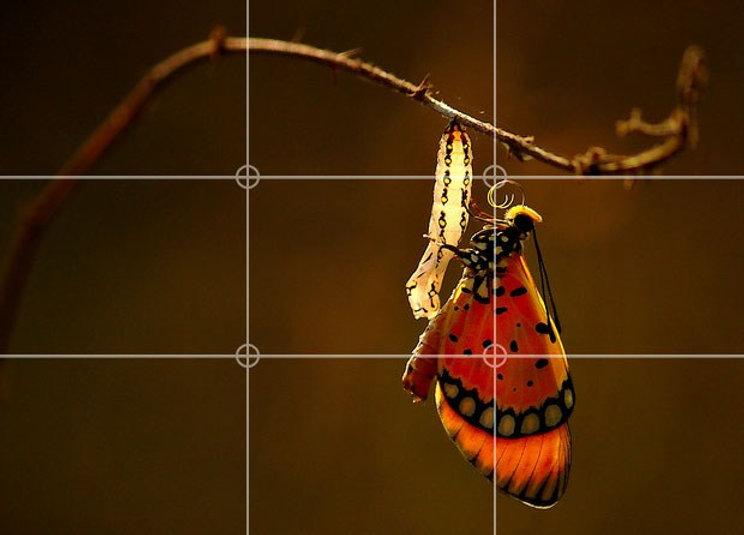 rule-of-thirds-still-life.jpg