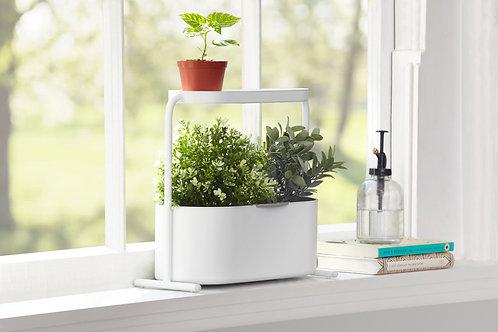 Giardino Herb and Plant Garden