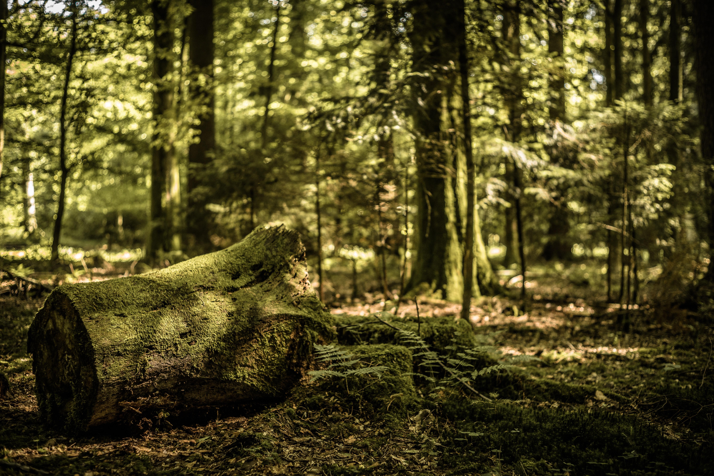 Las Rąk