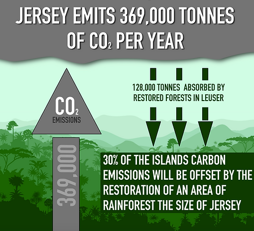carbon infograph.png