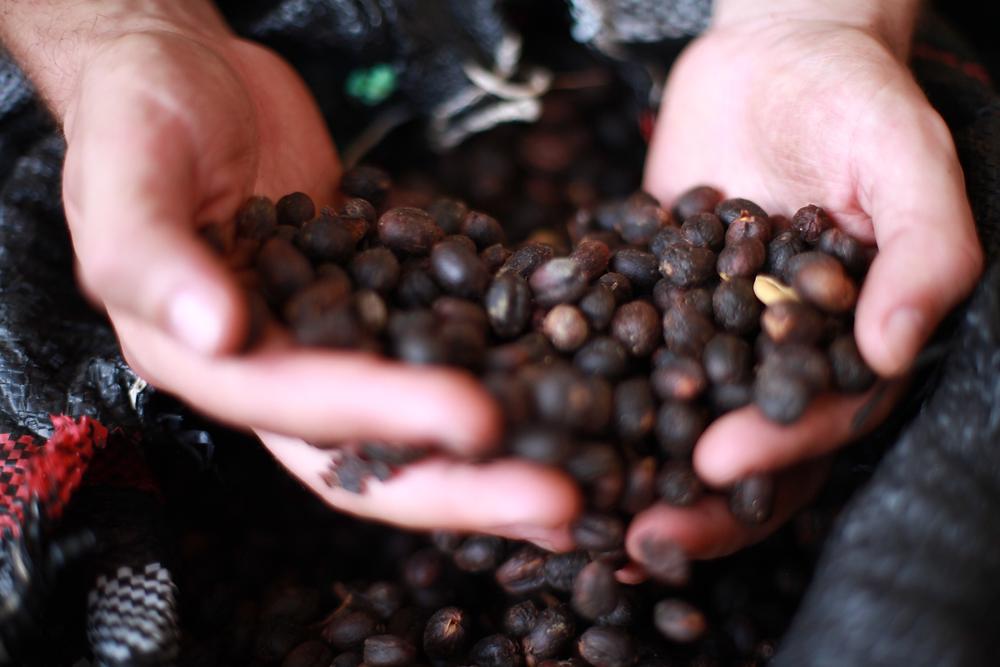 Dried Coffee Cherries