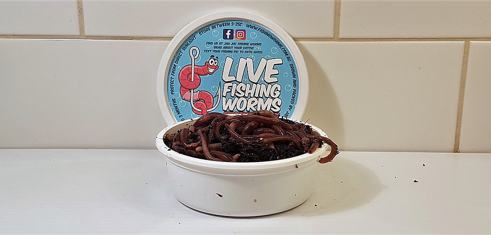 Buy Live Bait Fishing Worms Online | Pick Up | Melbourne