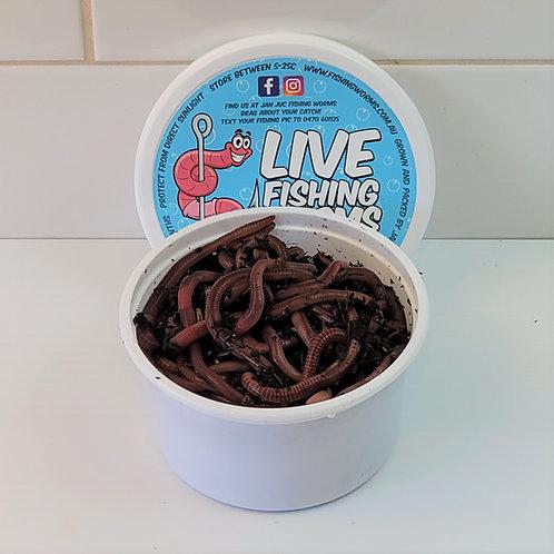 50 Live Bait Fishing Worms - European Nightcrawlers