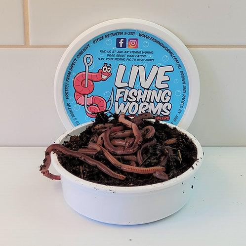 20 Live Bait Fishing Worms - European Nightcrawlers