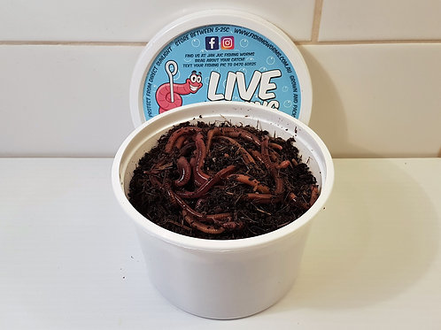 50 Live Bait Fishing Worms - European Nightcrawlers