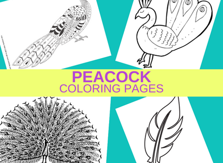 Peacock Coloring Pages | Freebie