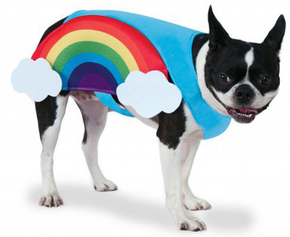 Rainbow dog accessories